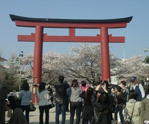 鎌倉 鶴丘八幡宮の参道